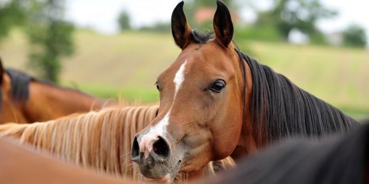 konie-160428-1200600