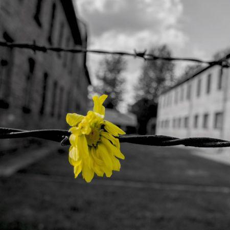 oboz-koncentracyjny-161214-815815